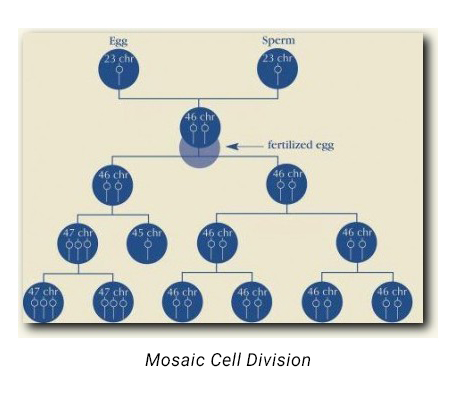 MOSAIC CELL DIVISION